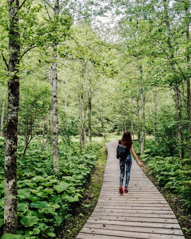 Wooden Pathway Mendlingtal